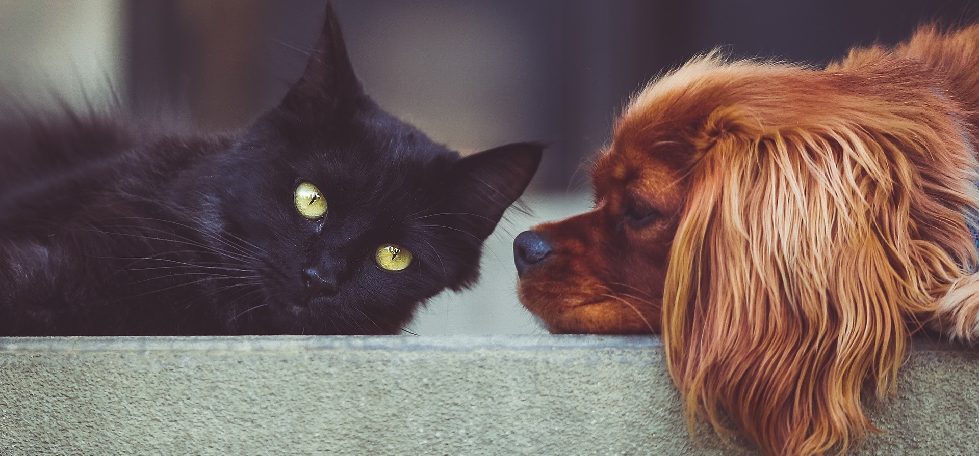 How clearer questions are reshaping the pet insurance market